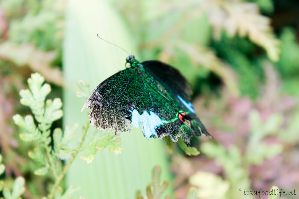 butterfly park Luang Prabang, Laos - It's a Food Life