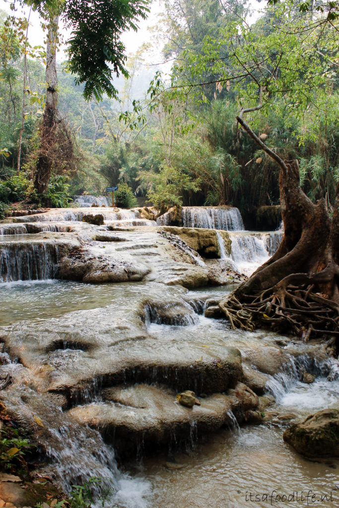 Kuang Si Falls in Luang Prabang, Laos - It's a Food Life